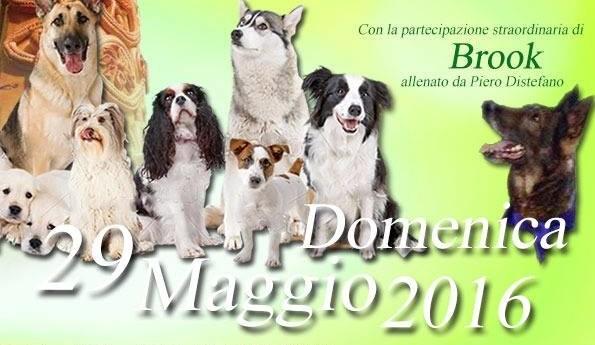 San Biagio Platani: 2° Esposizione Canina Amatoriale Sotto gli Archi di Pasqua